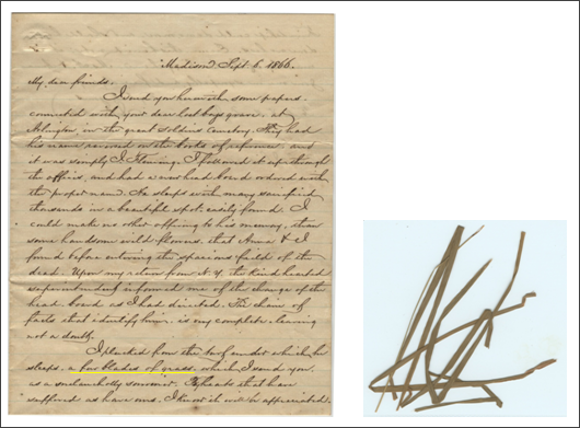 Letter with original blades of grass enclosed– September 6, 1866